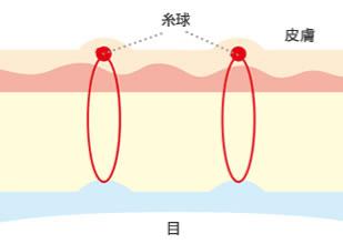 maibotsu